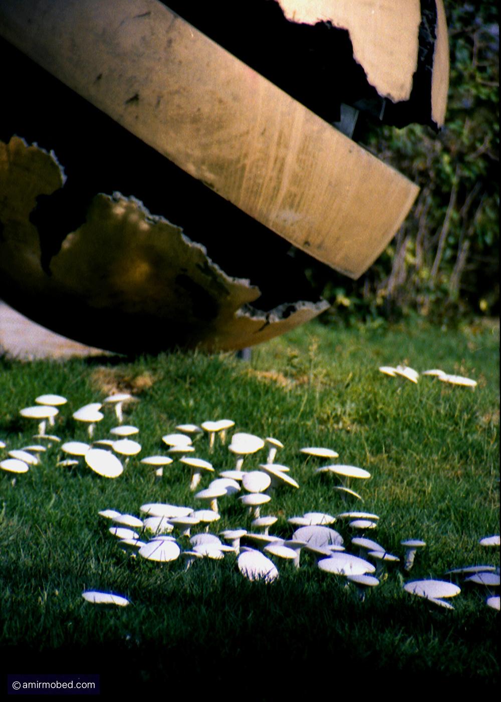 Mushrooms, 2002, Installation, 12,000 plaster mushrooms in the Sculpture Garden, Tehran Museum of Contemporary Art